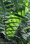Rainforest vegetation [costa-rica-d_0107]