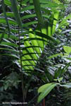 Rainforest vegetation