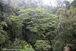 Rainforest canopy vegetation [costa-rica-d_0145]
