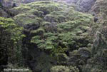 Rainforest canopy vegetation