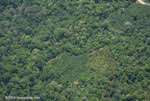 Aerial view of oil plantations amid forest in Costa Rica [costa-rica-d_0290]