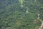 Aerial view of oil plantations amid forest in Costa Rica