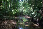 Forest stream on the Osa Peninsula