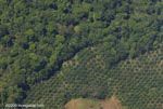 Oil palm plantation and forest in Costa Rica [costa-rica-d_0632a]