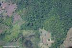 New oil palm plantation ajacent to rainforest