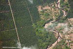 Aerial view of industrial oil palm plantations in Costa Rica [costa-rica-d_0743a]