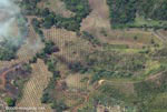 Overhead view of new oil palm plantations in Costa Rica [costa-rica-d_0763a]