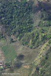 Aerial view of new oil palm plantations encroaching on forest land in Costa Rica [costa-rica-d_0778a]