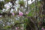 Lavendar flowers on a tree
