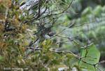 Bird [costa-rica_0381]