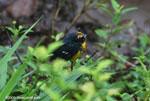 Bird [costa-rica_0472]