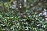 bird [costa-rica_0641]
