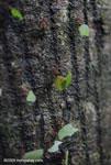 Leaf-cutter ants [costa-rica_0830]