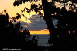 Sunset over the Pacific as seen through the Osa peninsula rainforest [costa-rica_0918a]