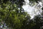 Canopy of the Osa Peninsula rainforest [costa-rica_0953]