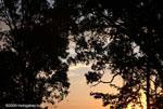 Sunset in the Costa Rican rainforest of the Osa Peninsula [costa-rica_0995]