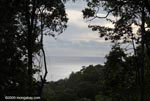 Pacific Ocean and Rainforest