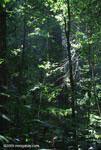 Tropical rainforest in the Osa Peninsula [costa-rica_1356]
