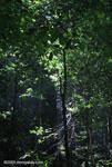 Tropical rainforest in the Osa Peninsula