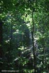 Tropical rainforest in the Osa Peninsula [costa-rica_1358]