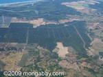 Industrial oil palm in Costa Rica [costa-rica_a_0074]