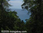 Pacific Ocean and tropical rainforest