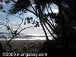 Osa beach [costa-rica_a_0157]