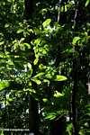 Pacific coast rainforest of Costa Rica [costa_rica_5432]