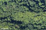 Aerial view of rainforest in Costa Rica [costa_rica_aerial_0069]