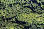 Overhead view of rainforest in Costa Rica [costa_rica_aerial_0071]