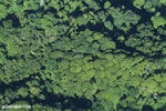Overhead view of rain forest in Costa Rica [costa_rica_aerial_0072]