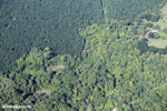 Aerial view of oil palm plantations in Costa Rica [costa_rica_aerial_0087]