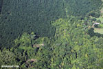 Aerial view of palm oil in Costa Rica [costa_rica_aerial_0089]
