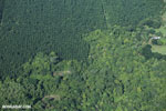 Airplane view of oil palm plantations in Costa Rica [costa_rica_aerial_0090]