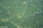 Aerial view of oil palm plantations in Costa Rica [costa_rica_aerial_0093]