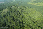 Aerial view of rainforest and oil palm plantations [costa_rica_aerial_0114]