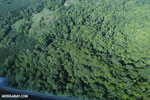 Airplane view of rain forest in Costa Rica [costa_rica_aerial_0116]