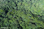 Aerial view of rain forest in Costa Rica [costa_rica_aerial_0118]