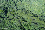 Overhead view of rain forest in Costa Rica [costa_rica_aerial_0120]