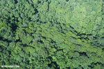 Airplane view of rainforest in Costa Rica [costa_rica_aerial_0121]