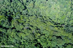 Aerial view of rainforest in Costa Rica [costa_rica_aerial_0123]
