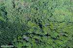 Aerial view of rainforest and oil palm plantations [costa_rica_aerial_0126]