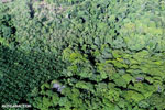 Aerial view of rainforest and oil palm plantations in Costa Rica [costa_rica_aerial_0127]