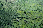 Aerial view of rainforest and oil palm plantations [costa_rica_aerial_0128]