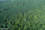 Aerial view of rainforest and oil palm plantations [costa_rica_aerial_0132]