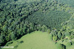 Aerial view of rainforest and oil palm plantations in Costa Rica [costa_rica_aerial_0151]