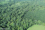 Aerial view of rainforest and oil palm plantations [costa_rica_aerial_0152]