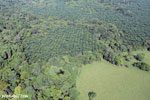 Aerial view of rainforest and oil palm plantations [costa_rica_aerial_0154]