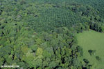 Aerial view of rainforest and oil palm plantations in Costa Rica [costa_rica_aerial_0155]