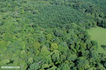 Aerial view of rainforest and oil palm plantations [costa_rica_aerial_0158]